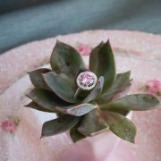 engagement ring, plant