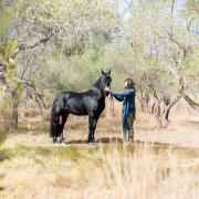 horse, suit