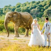 bride and groom, bride and groom, bride and groom, bride and groom, bride and groom, bride and groom, elephant, safari, wildlife, bride and groom