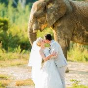 kiss, safari, veil, elephant, wildlife