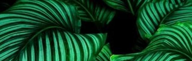 'Looks We Love' - Green