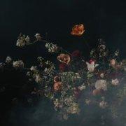 dark, flowers