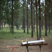 forest, outdoor wedding, wedding games