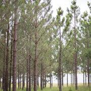 forest, outdoor wedding