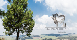 Brahman Hills Special Offer