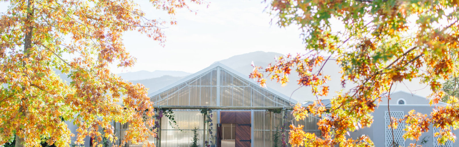 The Orchid House: Môreson's New Exclusive Wedding Venue