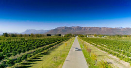 The Perks of Getting Married in the Winelands