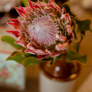 proteas - Towerbosch Earth Kitchen