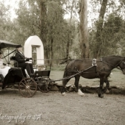 horse, carriage