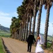 view, wedding venue, palm trees - Skilpadvlei Wine Farm