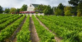Skilpadvlei Wine Farm