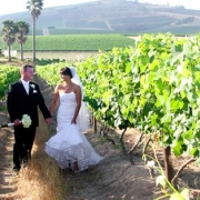 venue, vineyard, winelands - Skilpadvlei Wine Farm