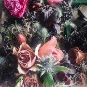 Anna Botany