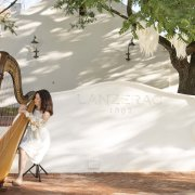 harp, music, venue