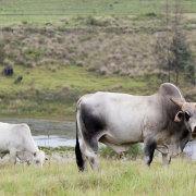 wildlife - Brahman Hills