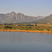 winelands - Cavalli Estate