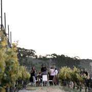 Arra Vineyards