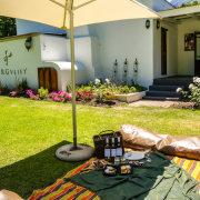 wine, wine farm