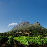 mountain, vineyard