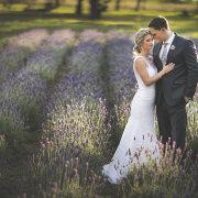 lavender, suit, venue - Lavender Hill