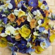 flowers - PetalMania