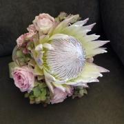 flowers, protea - PetalMania