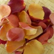 petals - PetalMania
