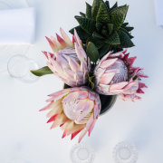 flowers, proteas - Sorrento Events