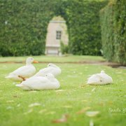 duck - Zonnevanger