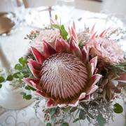 flowers, protea - Flowerheart