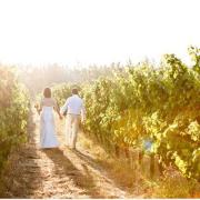 vineyard, winelands - Waverley Hills