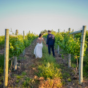 vineyard, overberg wedding venue, overberg wedding venue, overberg wedding venue - Lothian Vineyards
