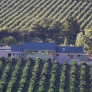 venue, vineyard, wedding venue, winelands
