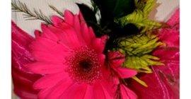 Anro Flower Farm