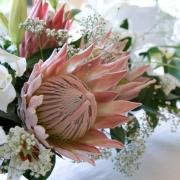 flowers, protea - Jenny B  Flowers