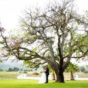 venue, tree, winelands