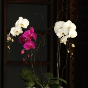 centrepiece, flowers, orchid - Opulence – INFINITE LUXURY