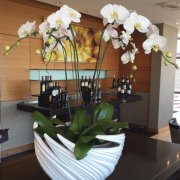 florals, orchids - Opulence – INFINITE LUXURY