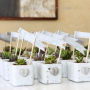 gift, plants - Succulent Oasis