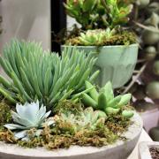 Succulent Oasis