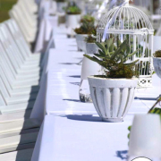 decor, outdoor reception, table setting, plant - Succulent Oasis