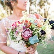 flowers, protea - Fabulous Fynbos