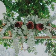flowers - Fabulous Fynbos