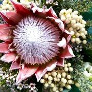 proteas - Fabulous Fynbos