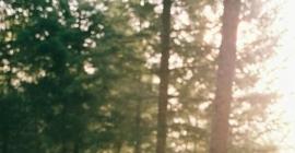 Forest Weddings