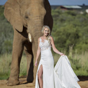 elephant, wedding dresses