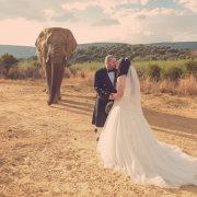 elephant, kiss