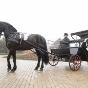 horse & carriage, horse and carriage